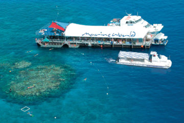 Reef Magic Cruises