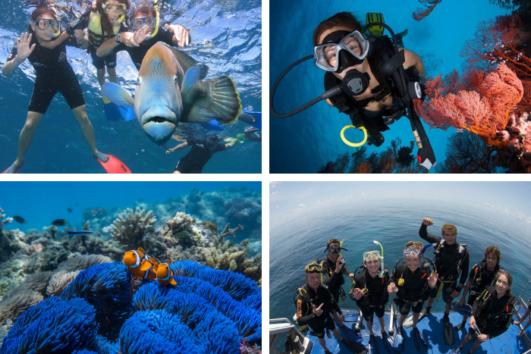 Snorkel & Dive