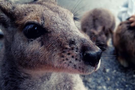 Wildlife, Zoos & Aquariums